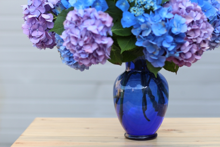blue hydrangea in a blue vase