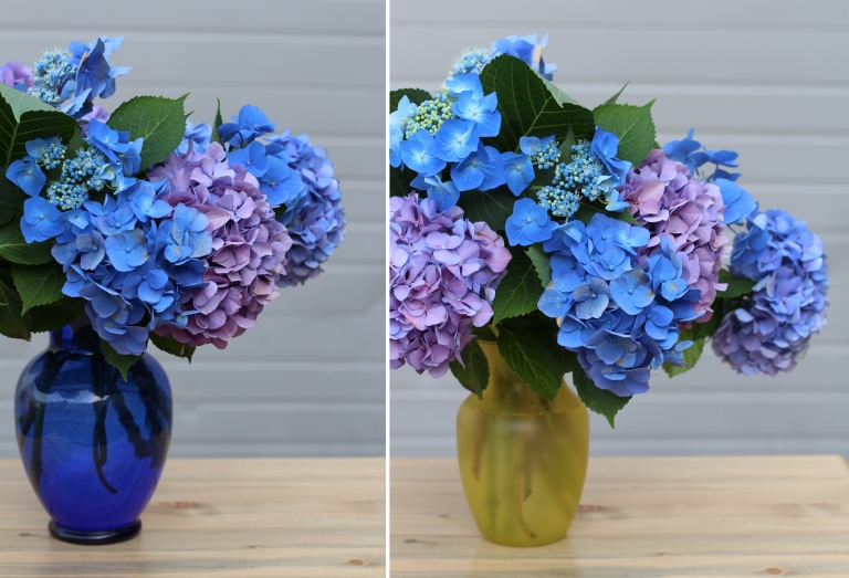 blue hydrangea in a blue vase and a yellow vase