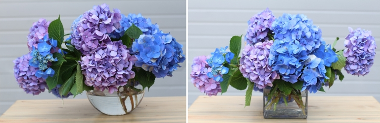 blue hydrangea in glass vases