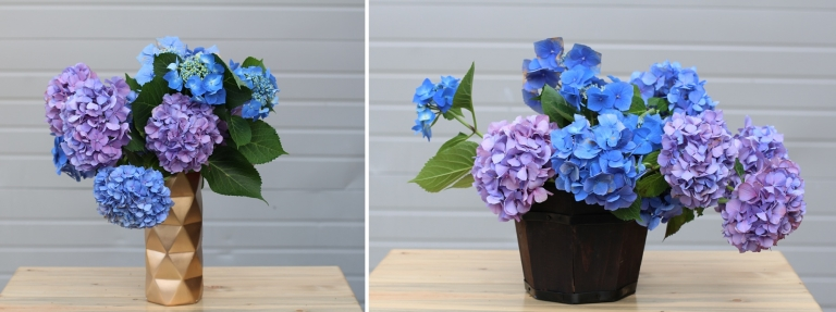 blue and purple hydrangea in vases